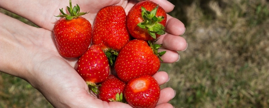Sexual abuse of workers in Spain's strawberry fields